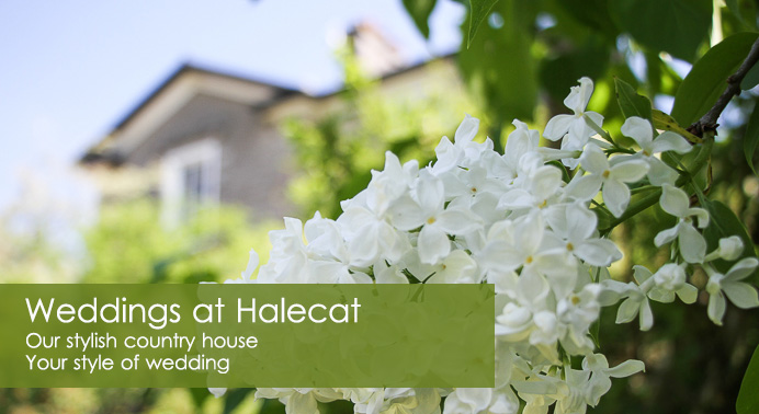 Weddings at Halecat